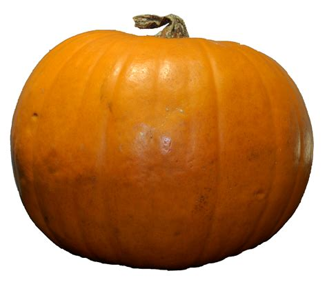pumpkin the pumpkin png images free download