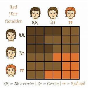 Back To Top Of Hair Color Genetics Dominant Recessive