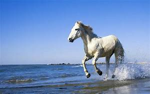 WHITE HORSE Quotes Like Success