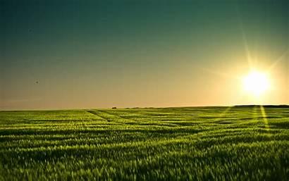 Summer Field 4k Grain Background Desktop Wallpapers