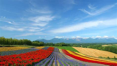 nature wallpaper spring japan  images