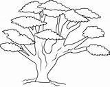 Tree Coloring Branch Pages Oak Colouring Drawing Trunk Trees Sheets Branches Printable Acacia Template Many Banyan Getcolorings Thanksgiving Templates Autumn sketch template