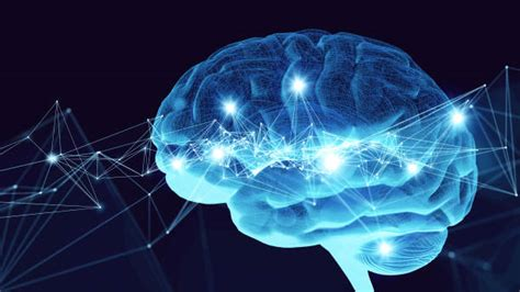 brain stock  pictures royalty  images