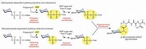 2017  U201ctargeting Bacillosamine Biosynthesis In Bacterial