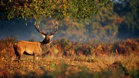 wallpaper deer steppe nature animals