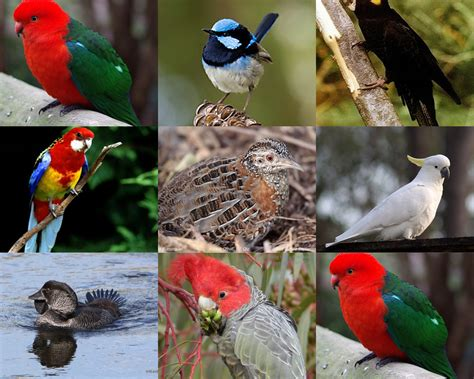 endemic species collage www pixshark com images