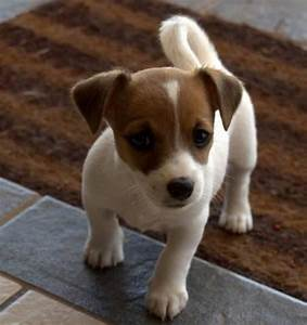 Small Dog Breeds Alphabetical | The Small Breed |Articles ...