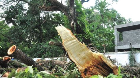 Kerala High Court Stays Order To Cut Tree