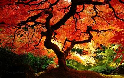 Fall Tree Were Trees Coming Autumn Nature