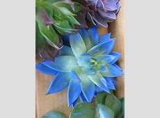 The official blog of J Schwanke Everything Flowers at