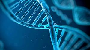 Humans May Harbor More Than 100 Genes From Other Organisms
