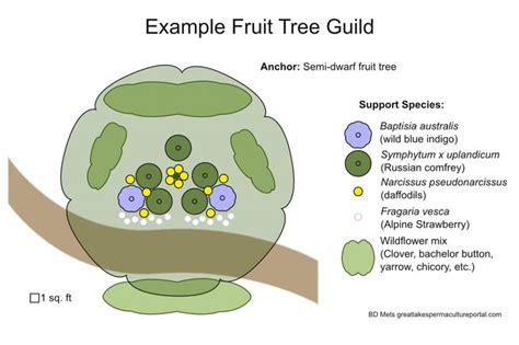 fruit trees images  pinterest gardening
