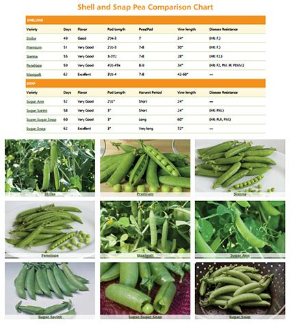 types of peas pea selection at johnny s the story of sugar ann