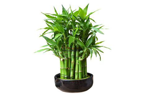 le bambou un c 244 t 233 naturel dans la d 233 coration de maison