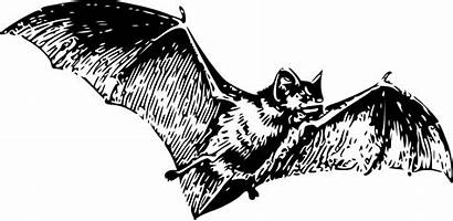 Bat Flying Illustration Tattoo Skull