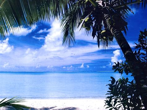 Tropical Backgrounds by Tropical Hd Wallpaper Tropical Images Cool