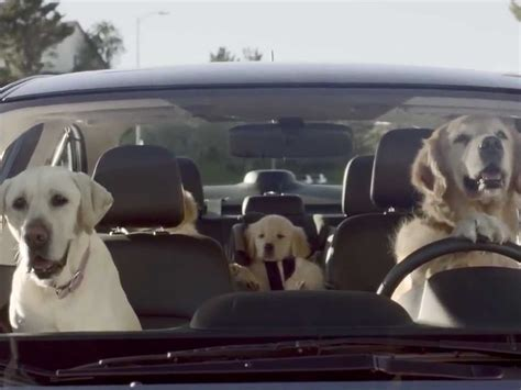 Subaru Puts Dogs Behind The Wheel, And Even Gives A Puppy