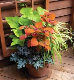 Sweet Potato Vine Planter
