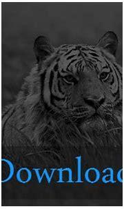 White Tiger Wallpaper HD ·① WallpaperTag