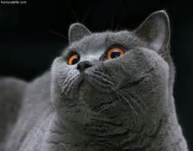 a cat proud cat