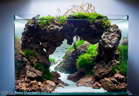 aga aquascaping contest