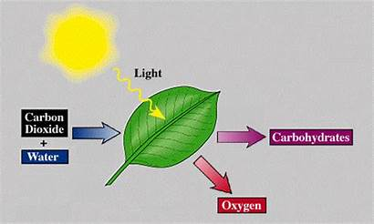 Photosynthesis Cell Animation Cycle Cells Science Inner