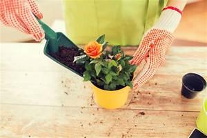Rosen Im Topf Pflege : rosen im topf sorten und pflegetipps ~ Lizthompson.info Haus und Dekorationen