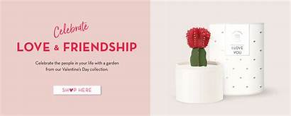 Gifts Succulent Garden Lula Corporate Birthday Gifting