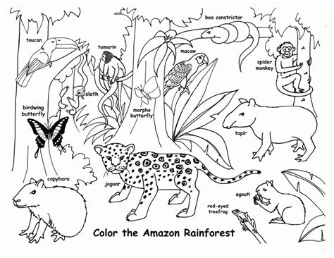 Rainforest Animals Coloring Pages by Free Printable Rainforest Coloring Pages Coloring Home