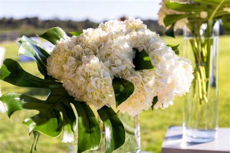 eichenblatt hortensie schneiden hortensien 187 pflanzen pflegen schneiden und mehr