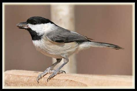 bird poop  north texas