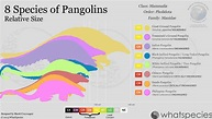The Pangolin: The most endangered animal you didn't know ...