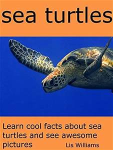 Sea Turtles - Learn Cool Facts about Sea Turtles and See ...