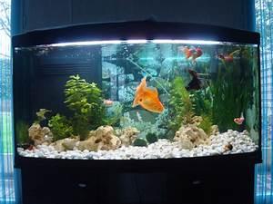 Idee Decoration Aquarium : id e d coration aquarium poisson japonais ~ Melissatoandfro.com Idées de Décoration