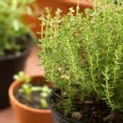 cultiver des plantes en pot jardinage