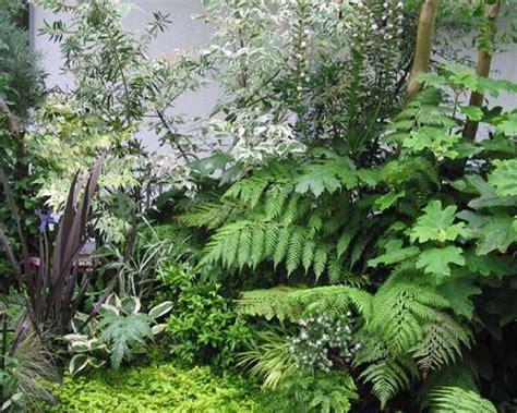 ferns in the garden 23 best images about fern garden on pinterest japanese painted fern ferns garden and hakone