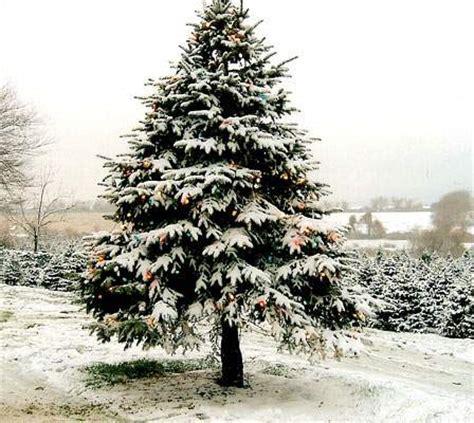 gambar pohon natal