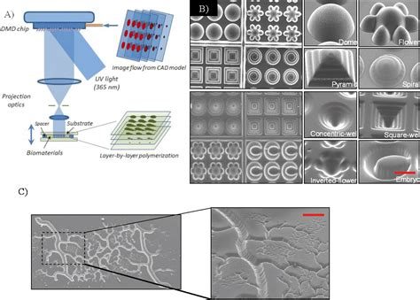 light assisted direct write   functional biomaterials