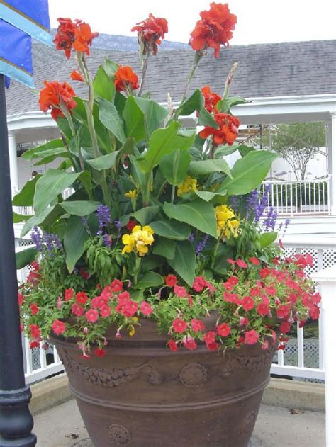 78 best cannas flowers images on garden beautiful flowers and flower