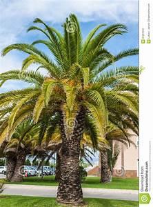 La Palma Jardin : jard n de la palma delante de la casa fotograf a de ~ A.2002-acura-tl-radio.info Haus und Dekorationen