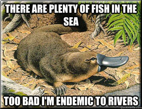 Fish In The Sea Meme - there are plenty of fish in the sea too bad i m endemic to rivers platitudinous platypus