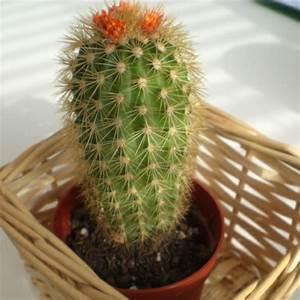 Green Indoor Plants – Flowering, Easy To Grow Pot Plants ...