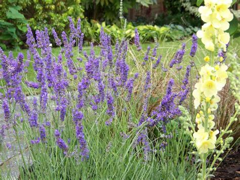 Garden Planting  Surrey  Hampshire  Ash Valealdershot