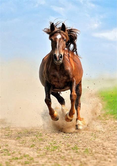 horses around most things horse wild worlds animals