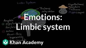 Emotions  Limbic System