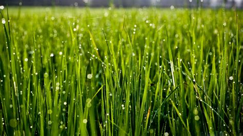 HD Wallpaper Grass Download