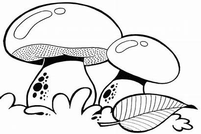 Mushroom Coloring Pages Trippy Colouring Above Ground
