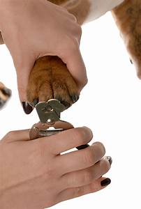 how to clip your pets nails