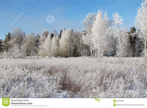 Winter Landscape With Frozen Trees And Blue Sky Stock