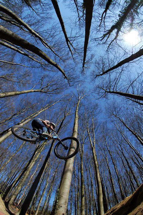 bike riding   trees custom wallpaper